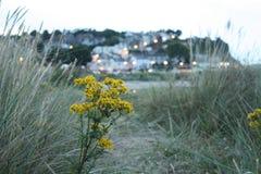 Pequeña ciudad de la playa en la oscuridad imagenes de archivo