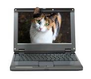 Pequeña computadora portátil con el gato Fotos de archivo libres de regalías
