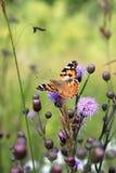 Pequeña concha sobre la flor del cardo en Italia imagen de archivo