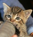 Pequeña consumición del gatito imagenes de archivo