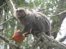 Pequeña consumición del mono imagen de archivo libre de regalías