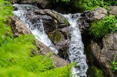 Pequeña corriente de la montaña de la cascada Imágenes de archivo libres de regalías