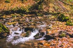 Pequeña corriente en bosque de la haya del otoño Foto de archivo