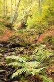 Pequeña corriente en bosque de la haya del otoño Imágenes de archivo libres de regalías