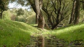 Pequeña corriente en el parque D3ia del otoño Tiro liso ancho del carro metrajes