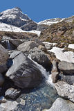 Pequeña corriente en las montañas de la primavera Fotografía de archivo
