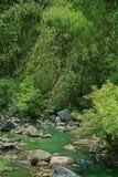 Pequeña corriente verde agradable en el bosque Fotos de archivo