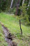 Pequeña corriente y pequeño árbol en el bosque en Rocky Mountain National Park foto de archivo