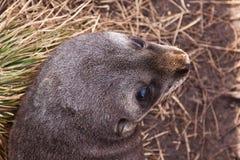 Pequeña cría de foca Imágenes de archivo libres de regalías