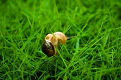 Pequeña cuchilla del caracol y de la hierba Foto de archivo libre de regalías