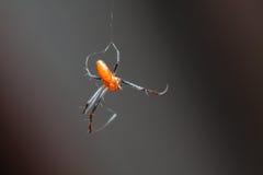Pequeña ejecución anaranjada de la araña en el aire Fotografía de archivo