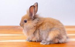 Pequeña estancia marrón linda del conejito o del conejo en la tabla de madera con el fondo blanco fotos de archivo libres de regalías