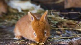 Pequeña familia de los conejos en la jaula metrajes