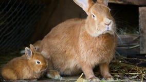 Pequeña familia de los conejos en la jaula almacen de video