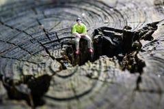 Pequeña figura en tocón de árbol Imagen de archivo