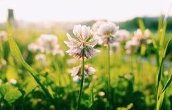 Pequeña flor imagenes de archivo
