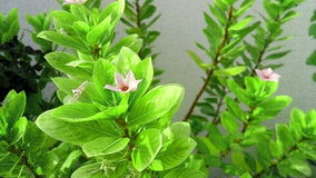 Pequeña flor Imagen de archivo libre de regalías