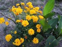 Pequeña flor amarilla Fotografía de archivo