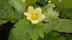 Pequeña flor amarilla Foto de archivo libre de regalías