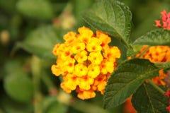 Pequeña flor amarilla Fotos de archivo libres de regalías