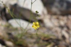 Pequeña flor amarilla imagen de archivo