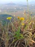 Pequeña flor amarilla del color imagenes de archivo