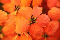 Pequeña flor anaranjada Fotografía de archivo