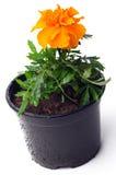 Pequeña flor anaranjada Imagen de archivo