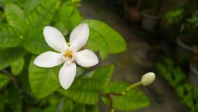 Pequeña flor blanca en verde Imagen de archivo