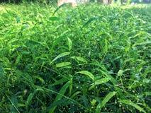 Pequeña flor de la hierba en prado verde bajo sol fotos de archivo libres de regalías