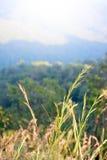 Pequeña flor de la planta con la niebla en paisaje de la montaña Foto de archivo libre de regalías
