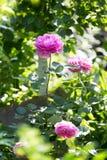 Pequeña flor hermosa en naturaleza Foto de archivo libre de regalías