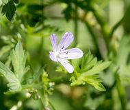 Pequeña flor hermosa en naturaleza Imagen de archivo