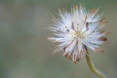 Pequeña flor macra de la hierba salvaje Imágenes de archivo libres de regalías