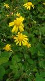 Pequeña flor ocultada Imagen de archivo libre de regalías