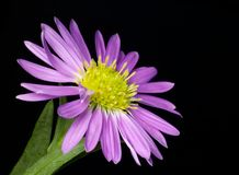 Pequeña flor púrpura Imagen de archivo libre de regalías