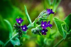 Peque?a flor p?rpura salvaje imagen de archivo libre de regalías