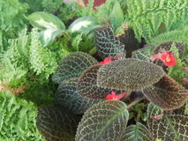 Pequeña flor roja Fotos de archivo