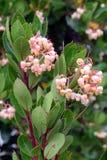 Pequeña flor rosada Imágenes de archivo libres de regalías