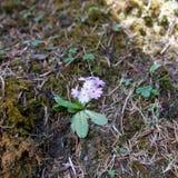 Pequeña flor rosada Imagenes de archivo