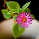 Pequeña flor rosada Imagen de archivo libre de regalías