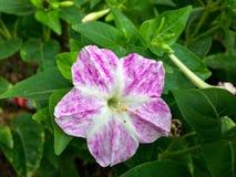 Pequeña flor rosada Foto de archivo