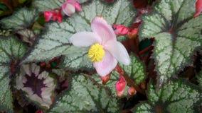 pequeña flor rosada en las hojas verdes Fotografía de archivo libre de regalías