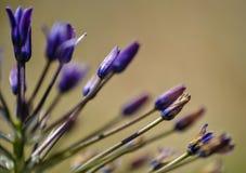 Pequeña flor violeta imágenes de archivo libres de regalías