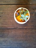 Pequeña flora en la tabla Imagen de archivo libre de regalías