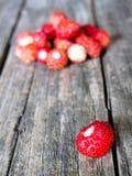 Pequeña fresa salvaje Fotografía de archivo