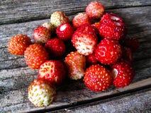 Pequeña fresa salvaje Imagen de archivo libre de regalías