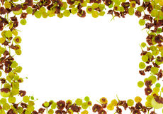 Pequeña frontera de las flores Fotografía de archivo libre de regalías