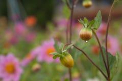 Pequeña gota de rocío en la flor foto de archivo