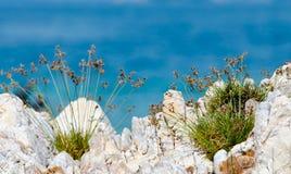 Pequeña hierba en la roca con la agua de mar clara azul. Fotos de archivo